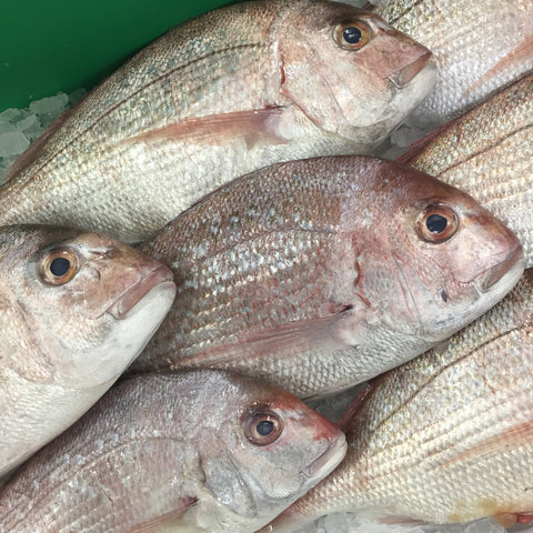 <b>FRESH WILD CAUGHT</b><br>New Zealand Snapper