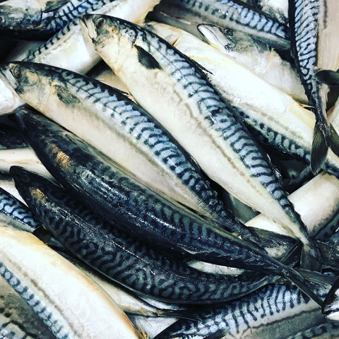 <b>WILD CAUGHT</b><br>Mackerel