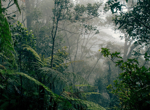 Borneo rainforest on a misty, damp day