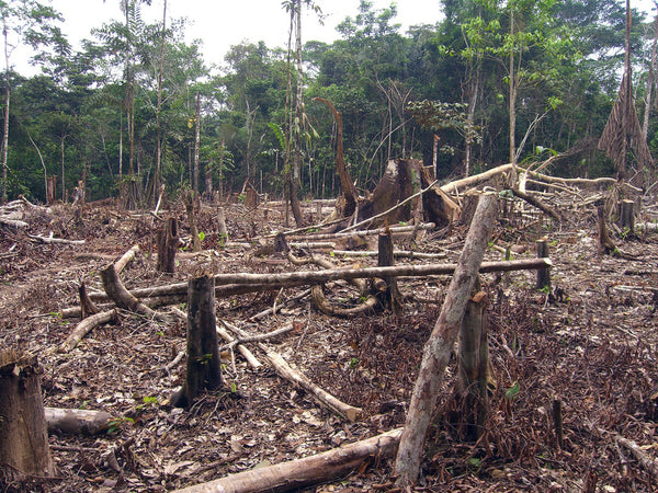 Amazonian deforested clearing