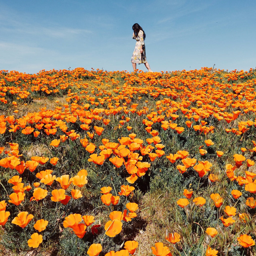 Superblooming in California: Top 3 SoCal Spots