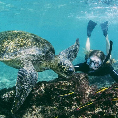 Snorkeling with the turtles Galapagos Islands