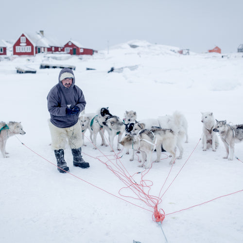GREENLAND - DOG SLEDDING DAY