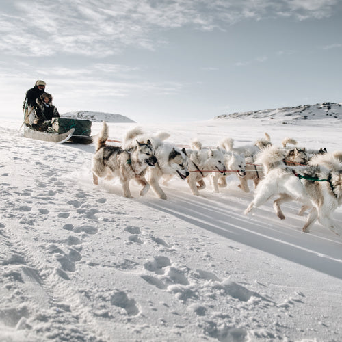 GREENLAND - DOG SLEDDING + CULTURAL IMMERSION - 3 DAYS/2 NIGHTS