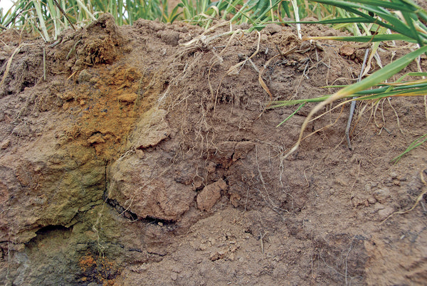 Correcting Soil Problems - Acidic Soil