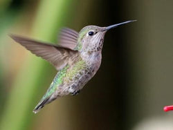 Protect your hummingbird feeder from bees!