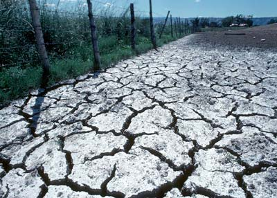 Do you have a problem with your soil for Soil salinization