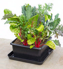Metro Grower Basic, Sub-Irrigation Garden Container - YourGardenStop