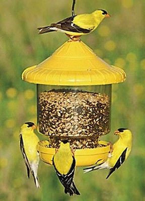 Clingers Only Bird Feeder - YourGardenStop