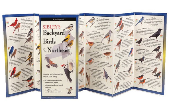 Sibley's Backyard Birds of the Northeast