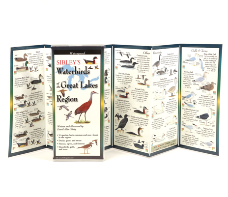 Sibley's Water Birds Great Lakes Region