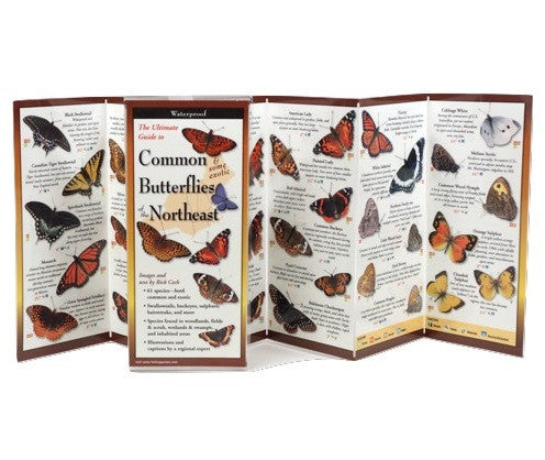 Common Butterflies of the Northeast - YourGardenStop