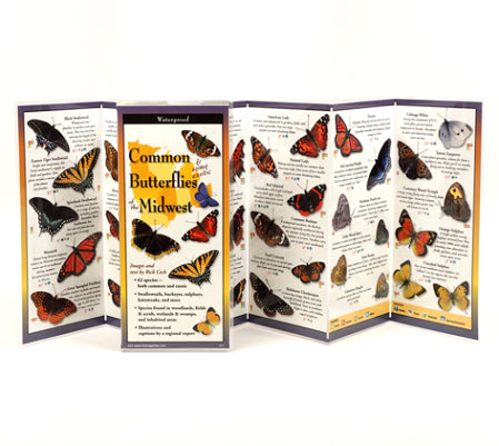 Common Butterflies of the Midwest