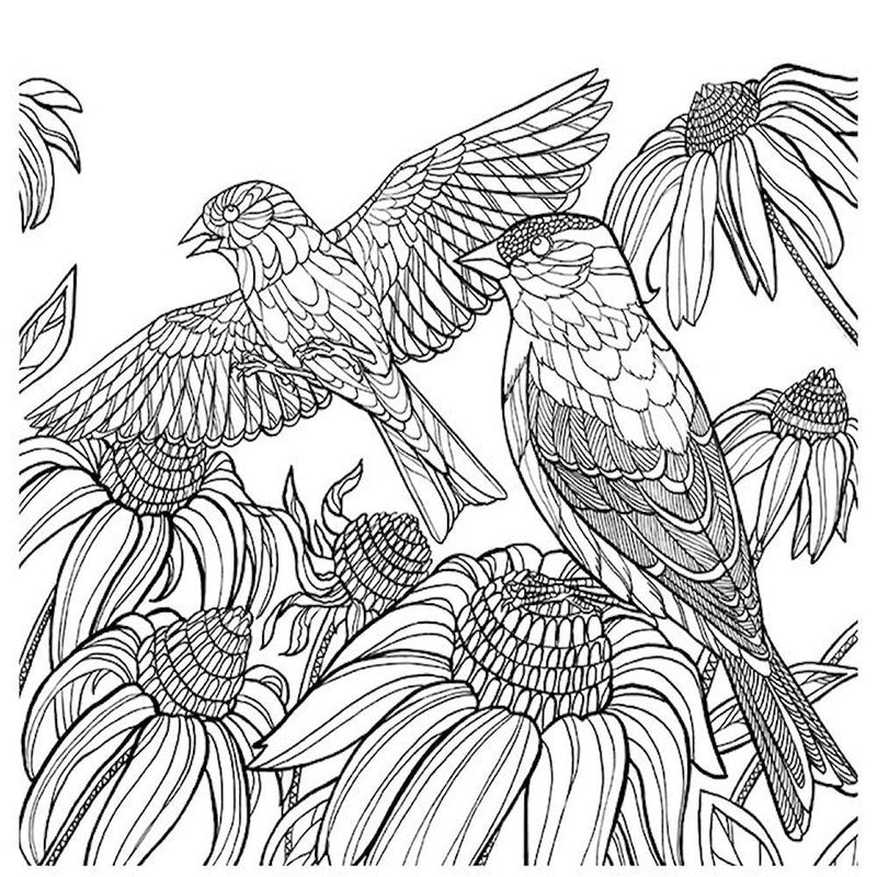 America's Favorite Birds: 40 Beautiful Birds to Color - Adult Coloring Book - YourGardenStop