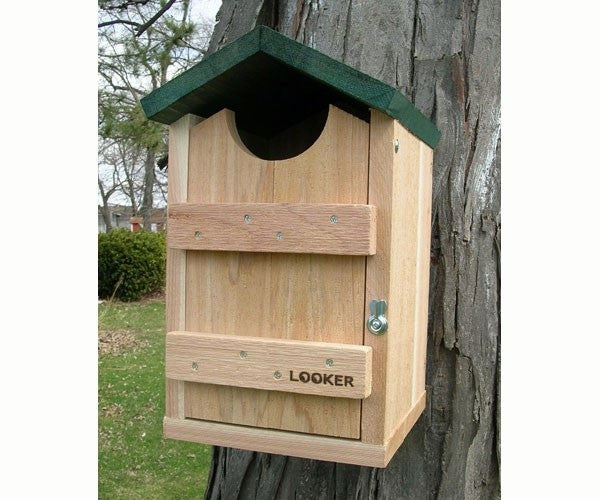 Screech Owl House - YourGardenStop