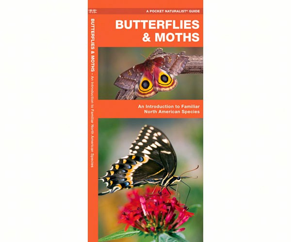Butterflies and Moths guide by Waterford Press - YourGardenStop