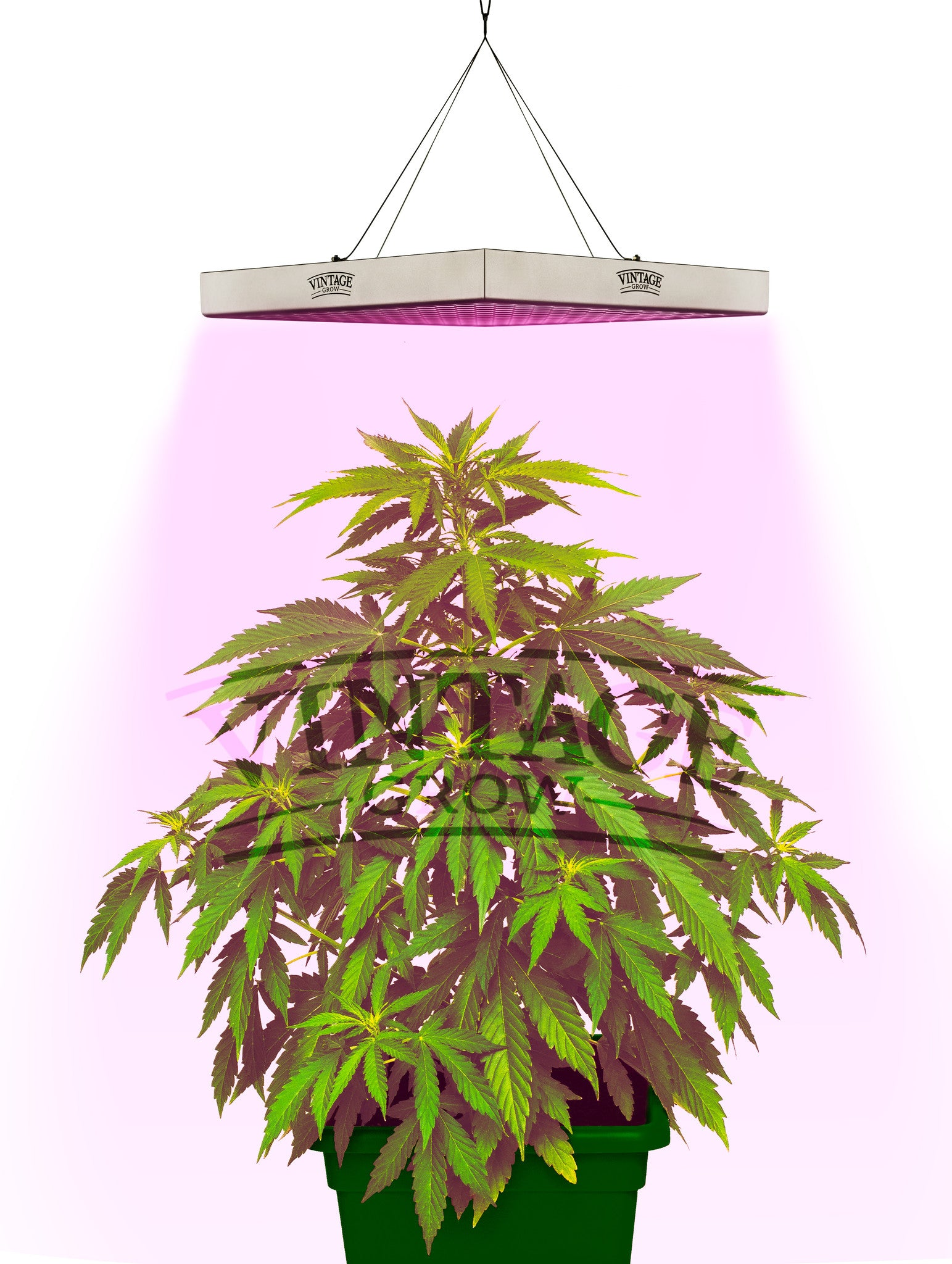 low best indoor easy lighting cover to plants and for light lights houseplants grow homes gardenoholic