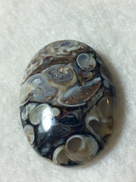 Turritella-Cabochon|Rock-N-Gem-Jewelry  Turritella (Turtella) Agate Fossilized agatized gemstone. Agatized snail fossils from the Green River Formation of Wyoming