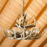 Whitetail 15 Antler Reproduction Chandelier