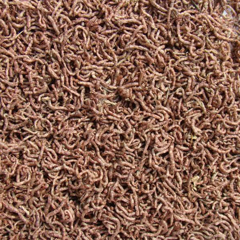 Dried Bloodworm