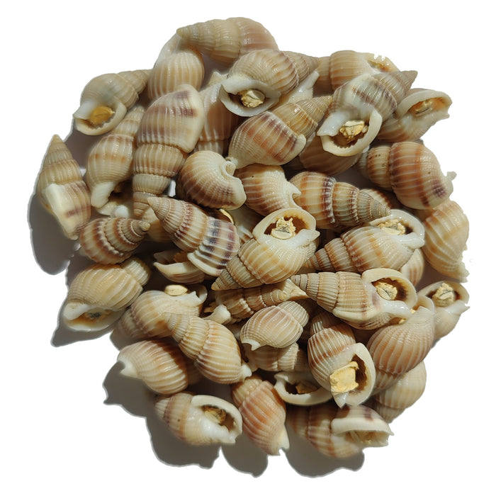 Freeze Dried Snails