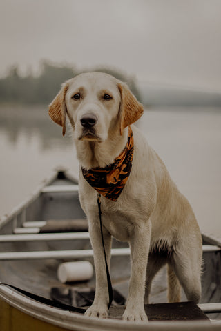 Algonquin, Outblog by The Great Outdogs @dogguide_arkell