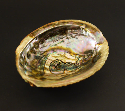 Abalone Smudge Shell