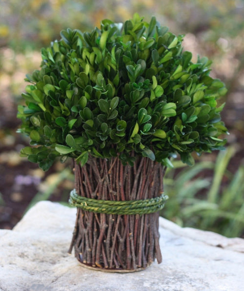 Boxwood Bundle with Twine