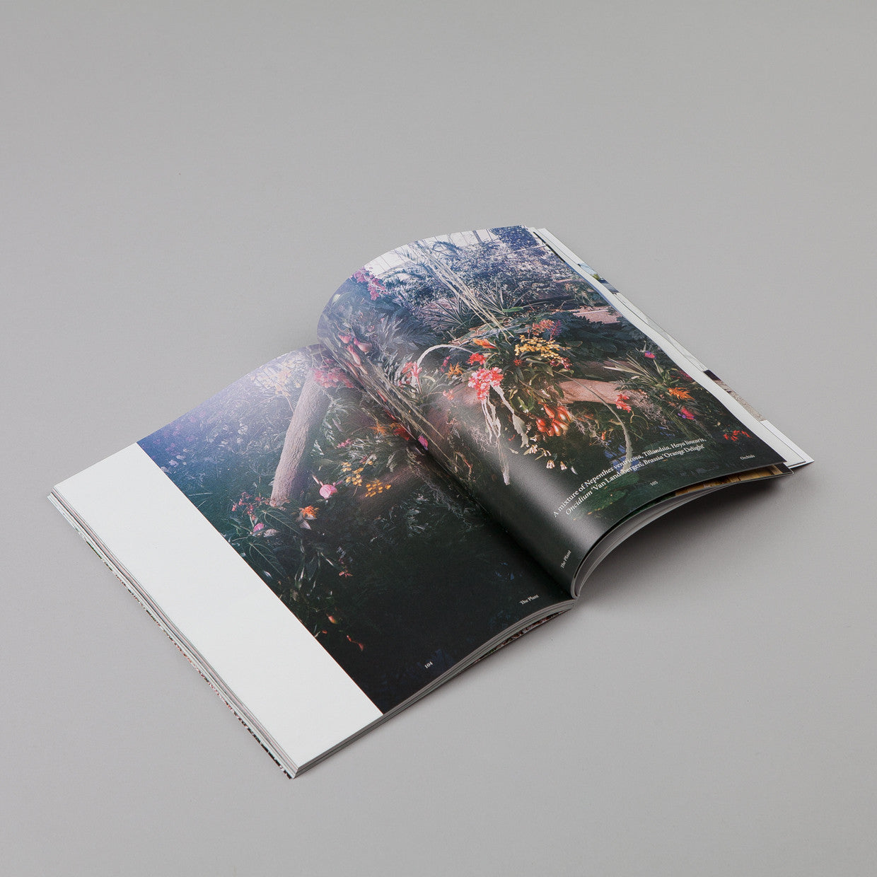 The Plant - Issue 06