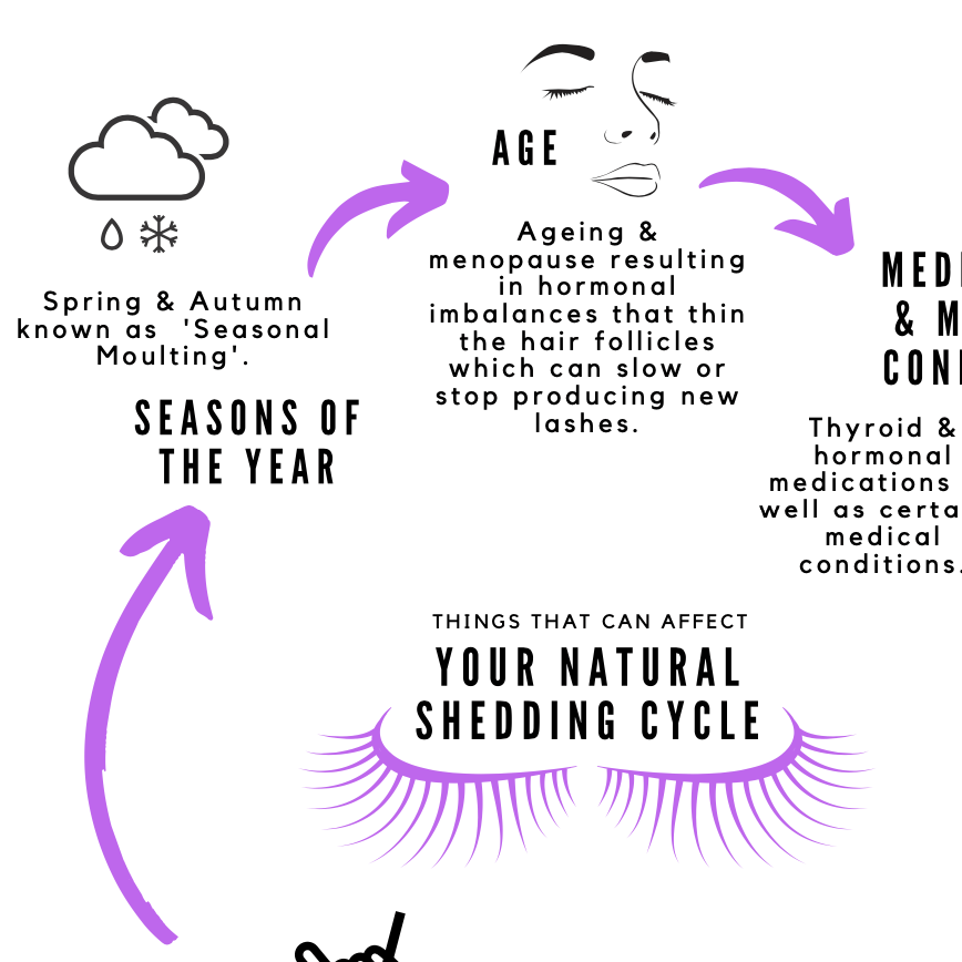 FREE Downloadable Shedding Cycle Info Poster