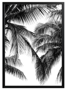 Black & White Palms Print