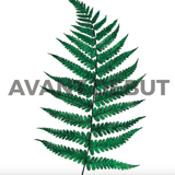 Avant Debut | Fern by Nika Akin Digital Art and Art Prints