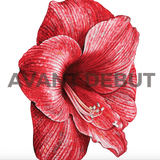 Nika Akin Print Products Red Flower
