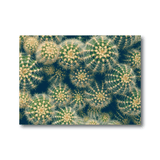 Avant Debut | Cactus by Olivia St. Claire Digital Art and Art Prints