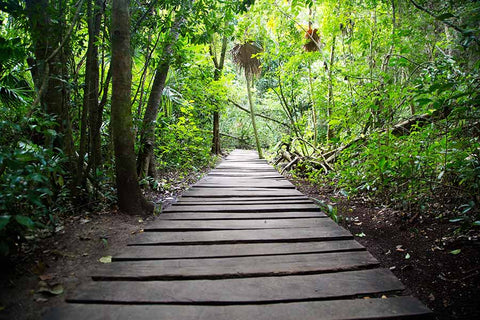 walking into cacao forest, why should I go to a cacao ceremony