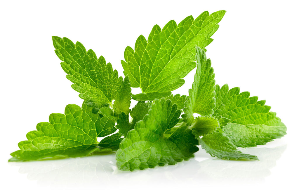 Ingredient Spotlight: Mint!