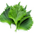 Shiso Leaf. fresh