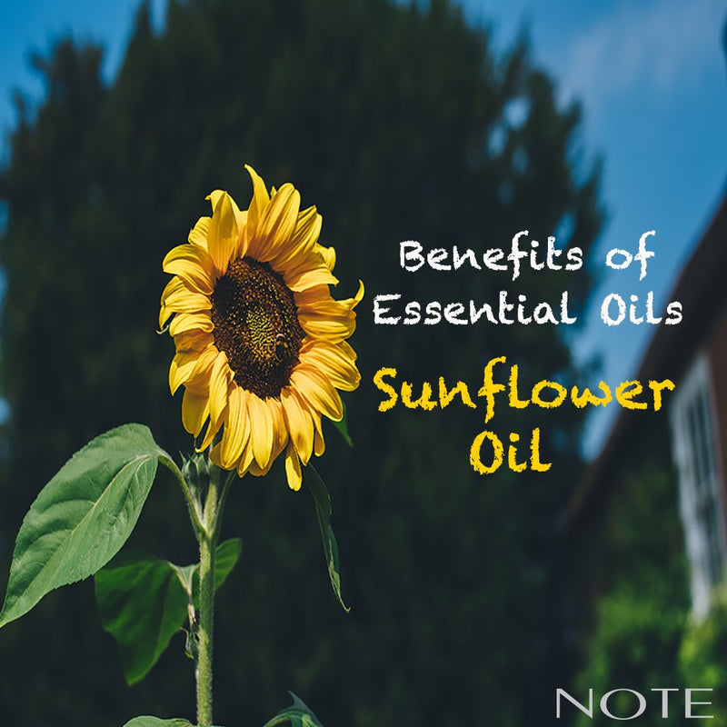 Benefits of Essential Oils - Sunflower Oil - Note Cosmetics Singapore