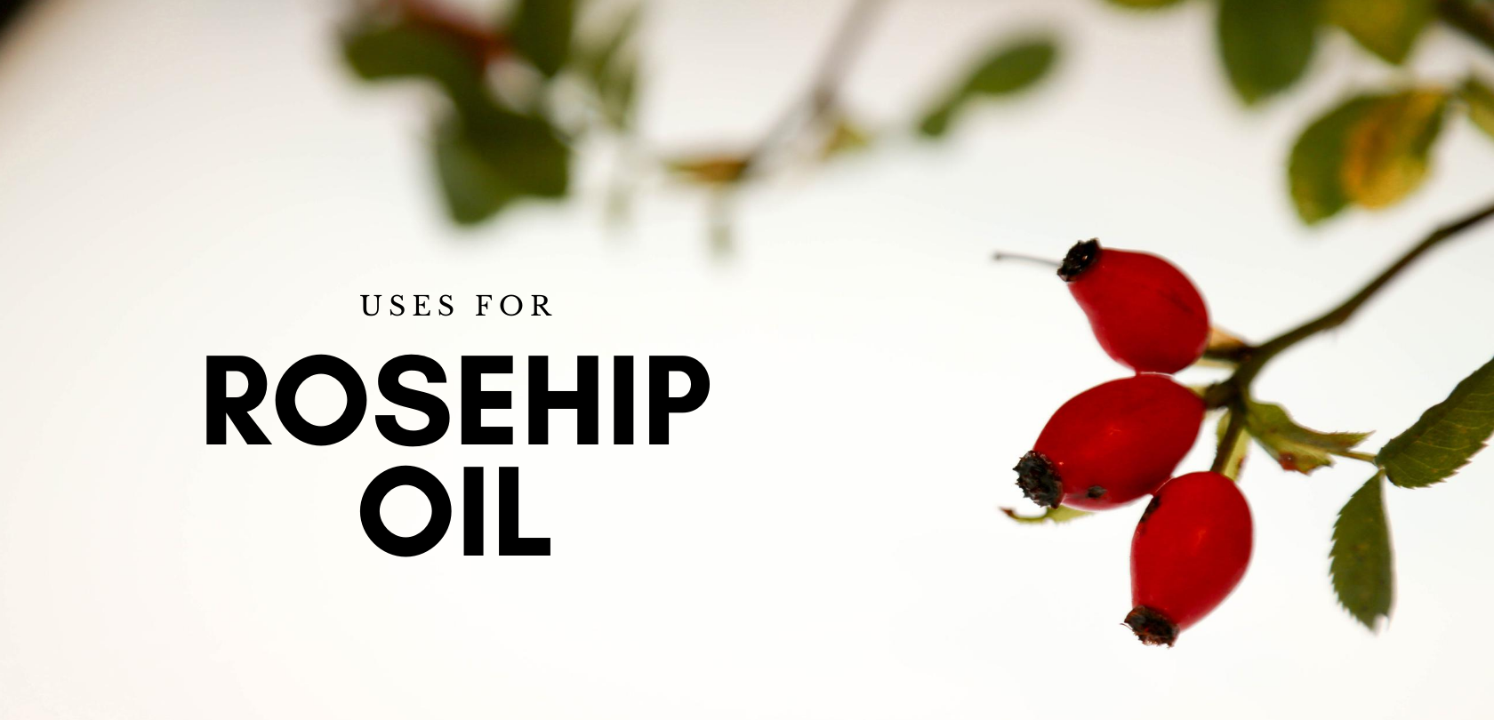 Uses For Rosehip Oil