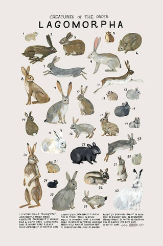 Creatures of the order Lagomorpha- vintage inspired science poster by Kelsey Oseid