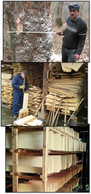 European tonewoods being measured, split and dried.