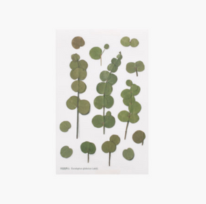 Appree Pressed Stickers- 002 Eucalyptus