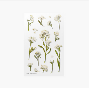 Appree Pressed Stickers- 016 Sweet Alyssum
