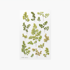 Appree Pressed Stickers- 021 Adiantum