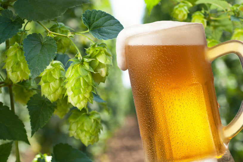 Vaping beer-flavored hops e-liquid treats leprosy (and other fun facts)