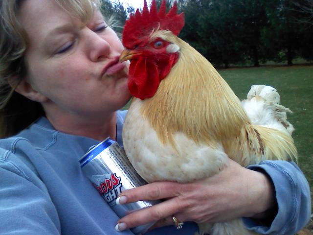 Tax dollars at work: CDC says kissing chickens causes disease