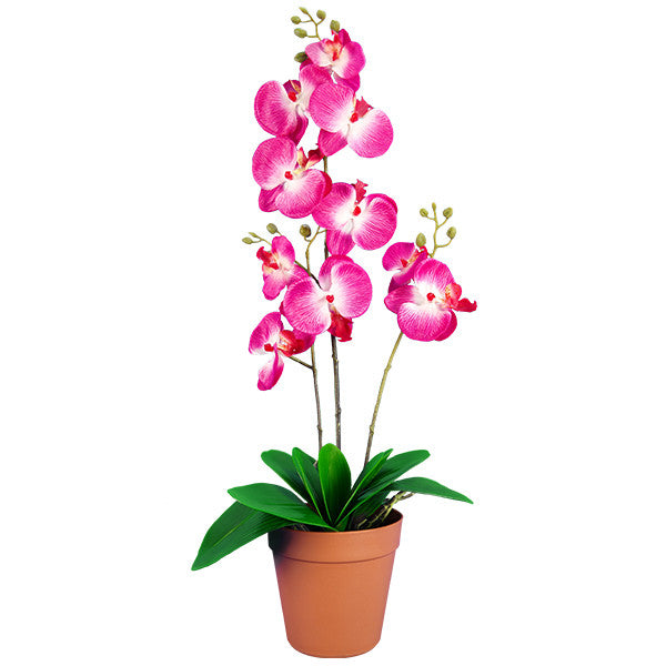 Ranka Plantas Artificiales Orquidea Hermosas Flores Artificiales
