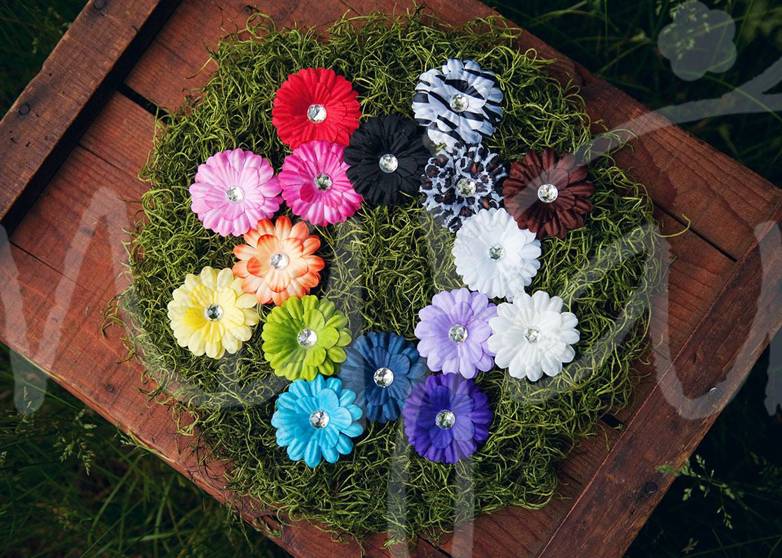 Small Bright And Colorful Gerber Daisy Flower Hair Clips Ema Jane