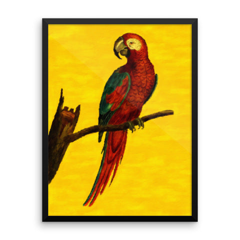 Beautiful Vintage Parrot Framed Art