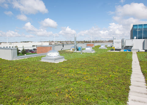 Green Roof of Building D at Fanshawe College exudes a verdant splendour the elevates the soul